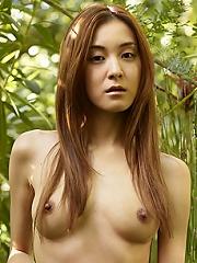 Saki Japanese Garden